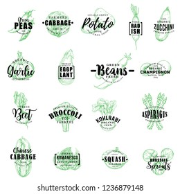 Vegetables sketch lettering icons. Vector veggie green pea, cabbage and potato, radish with zucchini and garlic, eggplant or champignon, beet with broccoli and kohlrabi, squash and asparagus