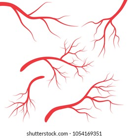 Vein set, Human vessel, blood arteries. Human vein, vessel set vector symbol icon design.illustration isolated on white background