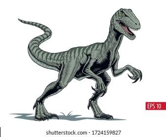 Velociraptor dinosaur, comic style vector illustration