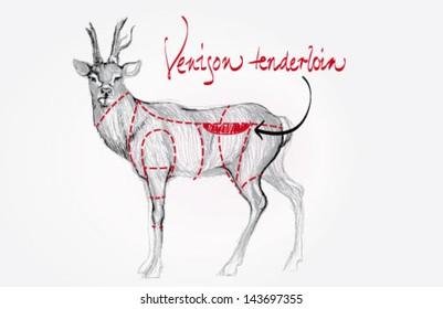 Venison tenderloin / Cuts of deer