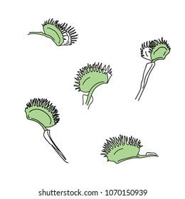 Venus flytrap buds