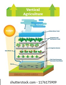 Vertical agriculture environment scheme vector illustration. Sustainable fish with rain water, soil, aeroponic, hydroponic crops, irrigation system and waste nutrients.