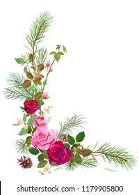 Vertical corner border with red, pink roses, pine branches, cone, common snowberry. Design concept for Christmas: flowers, leaves, white background, digital draw, watercolor style, vector
