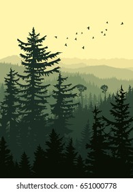 Vertical illustration of forest with green coniferous trees (sequoia) and birds.