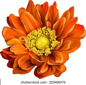 very beautiful bright orange flower