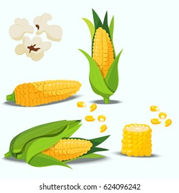 Very high quality original trendy vector set with sweet golden corn. Bunch of Corn. summer farm design elements