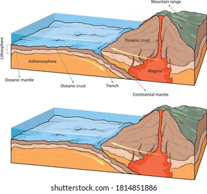Vestor illustratiion shows collision of oceanic and continental plates