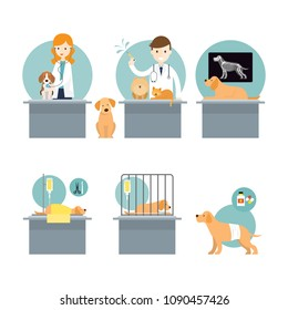 Veterinarians Checkup and Take Care of Sick Pets