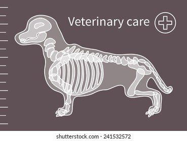 Veterinary care, dog medical treatment. Vector illlustration