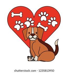 veterinary clinic petcare