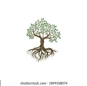 vibrant tree vector art, tree and roots illustrations isolated on white
