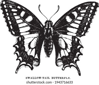 Victorian Entomology Illustration of Swallow Tail Butterfly - Vector of Vintage Insect