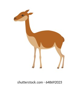 Vicuna animal. Llama vector illustration