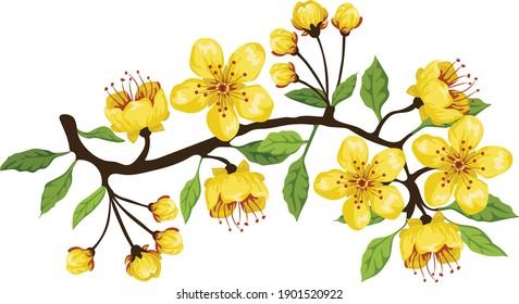 Vietnam yellow blossom tree flower  Tet holiday