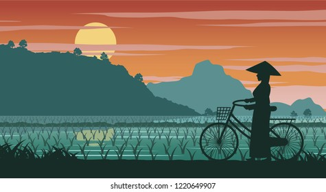 Vietnamese woman hold bicycle walk pass rice field on sunset time,vector illustration