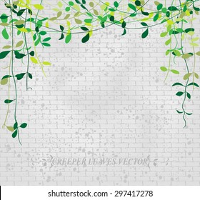 Vine leaves creeper over grey brick wall pattern, vector illustration background.