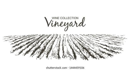 Vine plantation hills landscape. Drawing of rows of vineyards with wine stains. Vector line sketch illustration