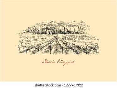 Vineyard. Drawing Classic Vineyard Landscape