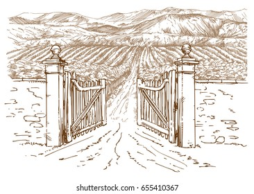 Vineyard entrance. Hand drawn illustration.