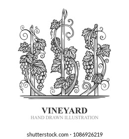 Vineyard hand drawn sketch. Grape and vine vintage style vector illustration. Wine theme design elements and template.