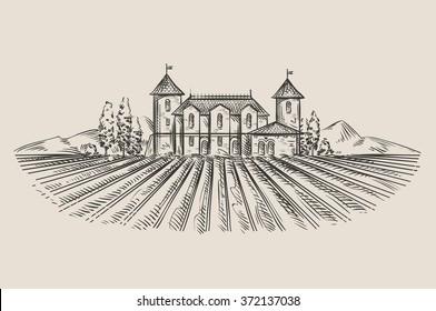 vineyard. hand-drawn sketch. vector illustration