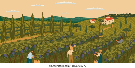Vineyard landscape with grape tree field and winery villa on background. Hand draw vector illustration poster. The harvesting of wine grapes. People work on a winery field