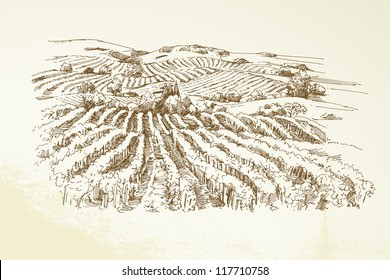 Vineyard Landscape  - hand drawn illustration