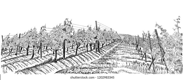 Vineyard landscape hand drawn sketch vector illustration isolated on white