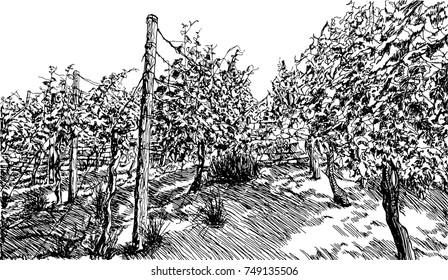 Vineyard landscape hand drawn sketch vector illustration on white