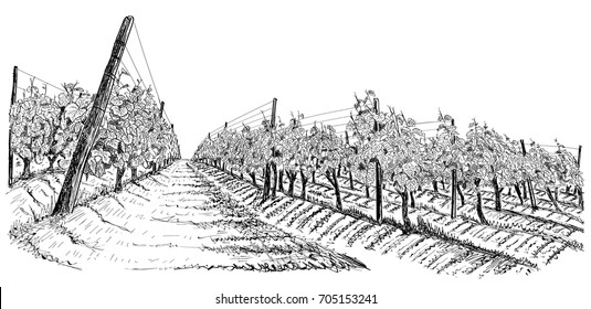 Vineyard landscape sketch isolated on white. Hand drawn vector illustration