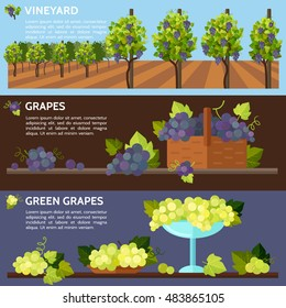 Vineyard tabletop design. Rows of grapes in a vineyard. Autumn  harvest