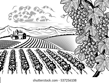 Vineyard valley landscape black and white. Editable vector illustration with clipping mask.