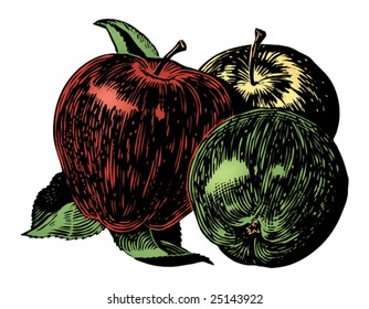 Vintage 1950s apples; Detailed black and white from authentic hand-drawn scratchboard includes full colorization.