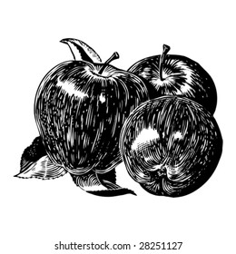 Vintage 1950s apples; Detailed black and white from authentic hand-drawn scratchboard.