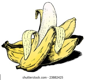 Vintage 1950s bananas; Detailed black and white from authentic hand-drawn scratchboard includes full colorization.