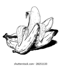 Vintage 1950s bananas; Detailed black and white from authentic hand-drawn scratchboard.