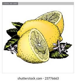 Vintage 1950s Lemons; detailed black and white from authentic hand-drawn scratchboard includes full colorization.