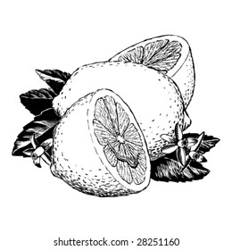 Vintage 1950s Lemons; detailed black and white from authentic hand-drawn scratchboard.