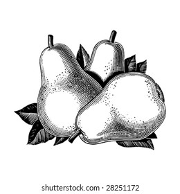 Vintage 1950s pears; Detailed black and white from authentic hand-drawn scratchboard.