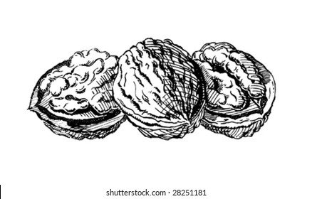 Vintage 1950s walnuts; Detailed black and white from authentic hand-drawn scratchboard.