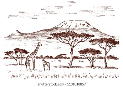 Vintage African landscape. Safaris and wild giraffes. Kilimanjaro mountain in Savannah. Animals engraved hand drawn old monochrome sketch for label.