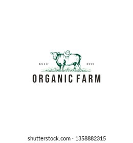 vintage angus / cow farm logo graphic design template vector illustration