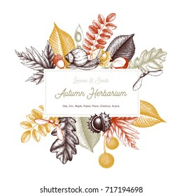 Vintage card design. Hand drawn leaves and seeds illustration. Vector autumn template. Wedding invitation.