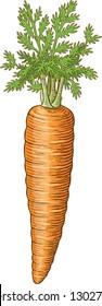 Vintage carrot vector