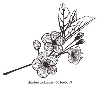 Vintage cherry with leaves and flowers prints. Old illustration with blooming flowers and leaves pattern. Coloring for adults-stress