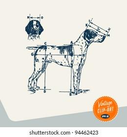 Vintage Clip Art - English Pointer dog - Vector EPS10.
