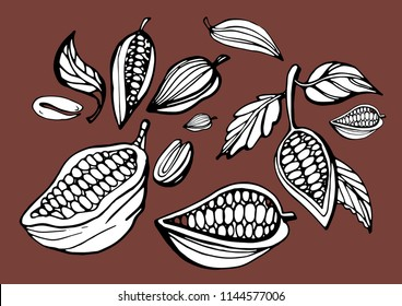 Vintage cocoa bean and pod engraving vector illustration. Set of coffee beans.