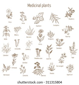 Vintage collection of hand drawn medical herbs and plants. Vector illustration.