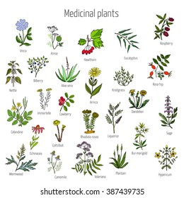 Medicinal Plants Images, Stock Photos & Vectors | Shutterstock