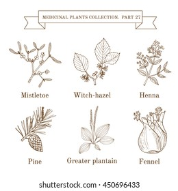 Vintage collection of hand drawn medical herbs and plants, mistletoe, witch-hazel, henna, pine, greater plantain, fennel. Botanical vector illustration